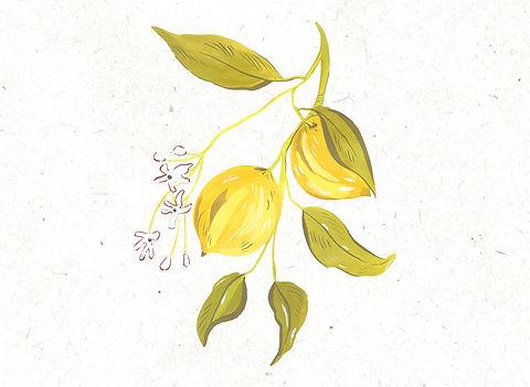 Lemons graINY.jpg