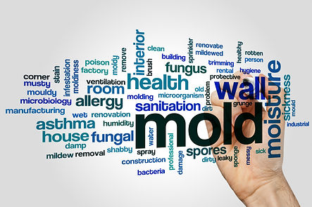 mold cleanup health risks