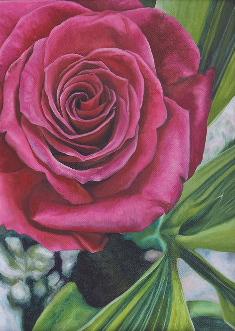 Rosa by Jackie Gwyther