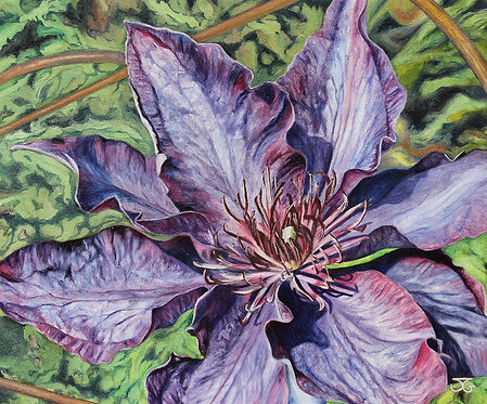 Clematis by Jackie Gwyther
