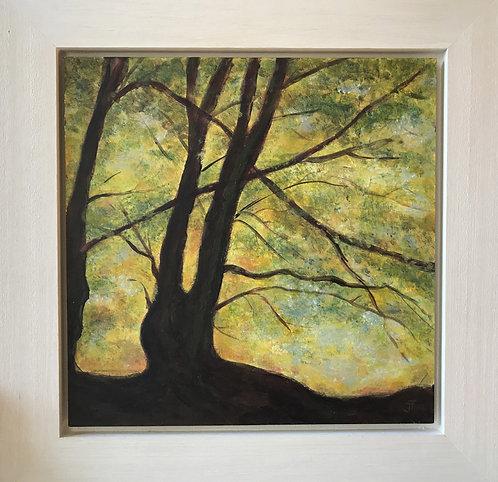 Autumn Light by Janice Thurston
