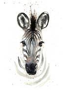 Zebra .jpg