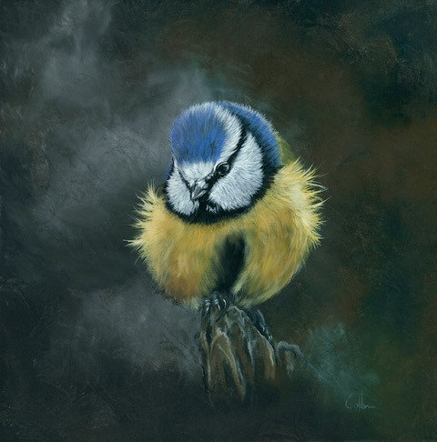 Giclee Print of Buffy the Blue Tit by Nicola Colbran
