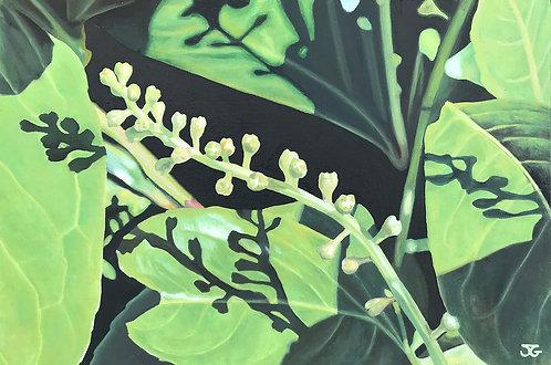 Flowering Laurel by Jackie Gwyther