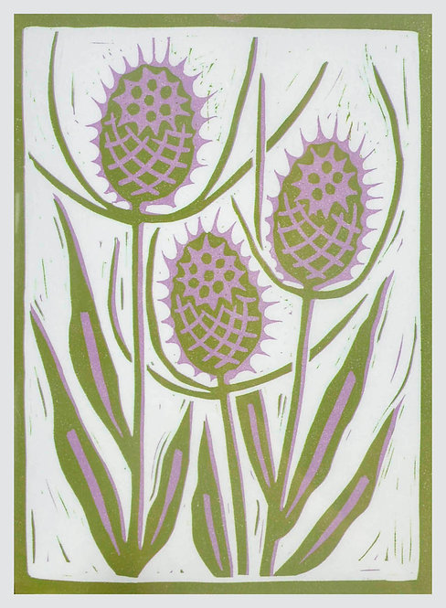 Teasels by Melissa Birch