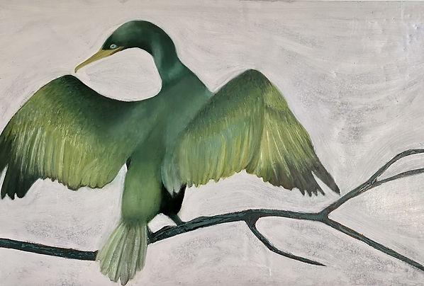 Iceland Cormorant