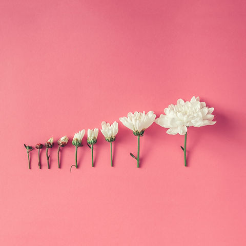 Creative arrangement of flowers on pink background. Blooming concept.jpg