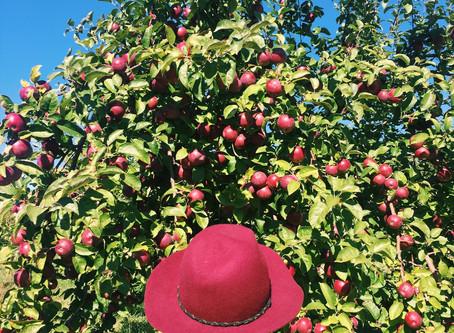 The Hoesli Lab goes apple picking!