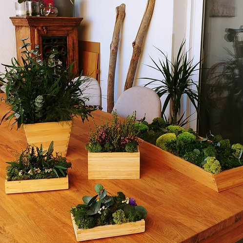Centros Bambú