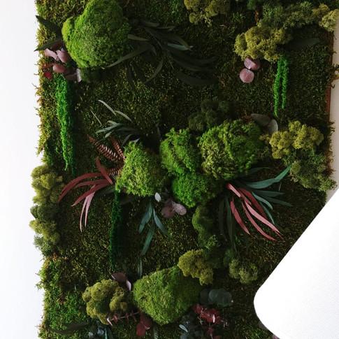 Jardin Nature Eucalipto