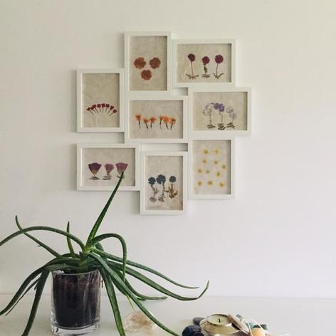 Collage Flores prensadas