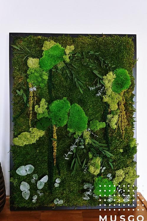 Nature Amarantus