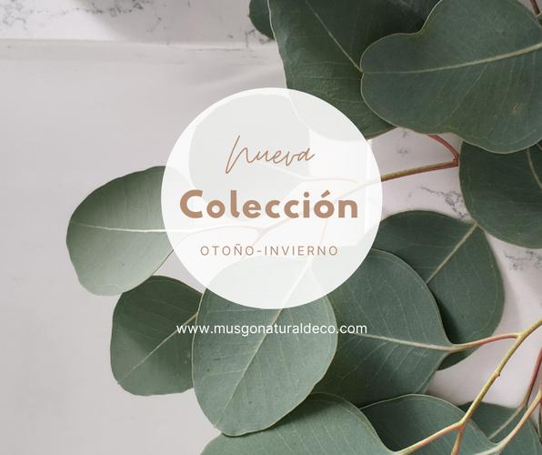 Colección equilibrio.png