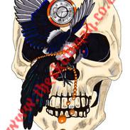 Magpie skull-1.jpg