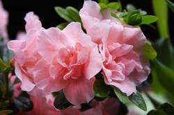 Flower Print 4