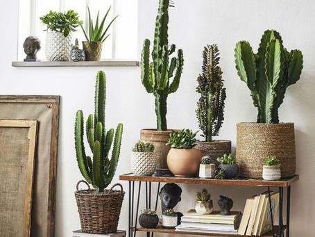Мне нравятся комнатные растения, но я не умею за ними ухаживать!