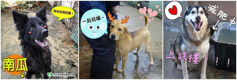 donate_adopt.jpg