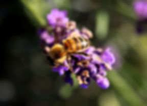 bee-1040522_960_720 (1).jpg