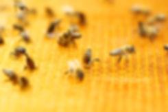 beehive-1-mp.jpg
