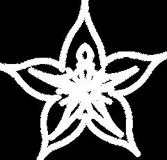 FN-logo-outln-white.png