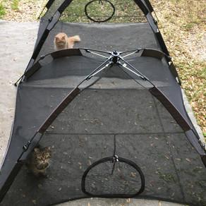 Cat Tent....what?
