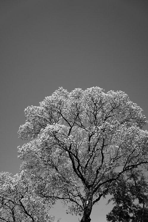 Árvore 02