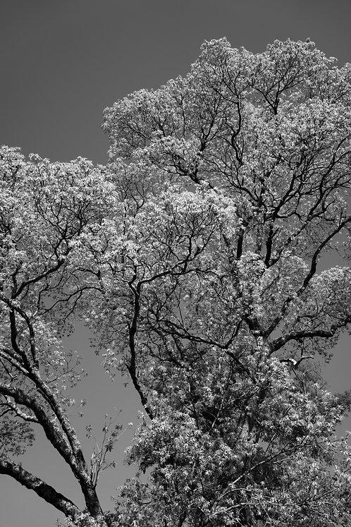 Árvore 01