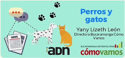 Perros y gatos.png