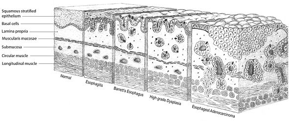 Website_tissue cubes-01.jpg
