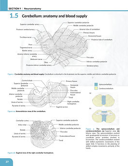 Cerebellum_Assign2_Phase1_final_V001-01.