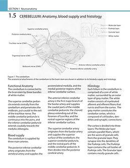 Cerebellum_Assign2_Phase1-01.jpg