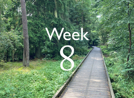Virtual Camino - week 8 update