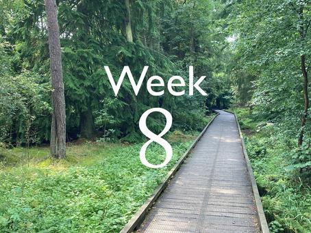 Virtual Camino - week 8 update