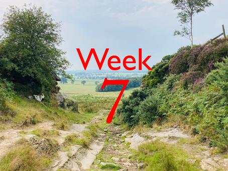 Virtual Camino - week seven update