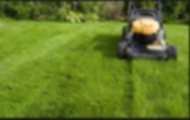 grass cutting