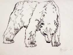 Polar Bear stranded
