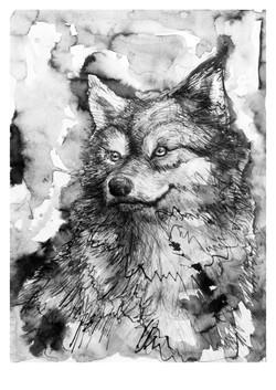 Kezia Wolf mezzo