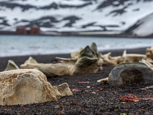 Whale Bones, Deception Island, Antarctica.JPG