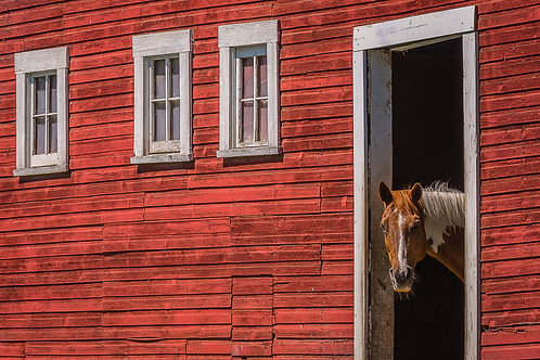 Horse and Red Barn, Palouse, Washington
