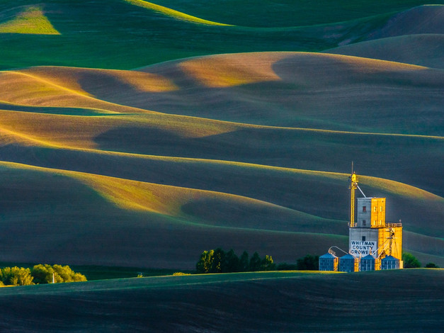 Green and Gold on the Palouse, Washington