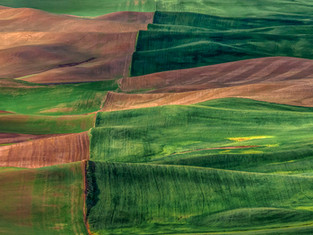 Velvet Greens, Palouse, Washington