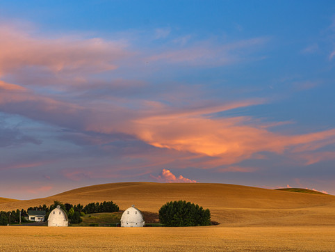 Two Barns and Summer Wheat, The Palouse