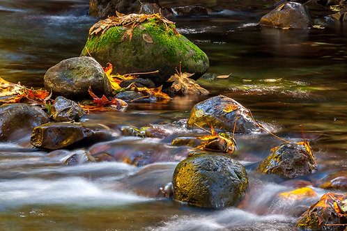 Autumn Leaves, Falls Creek, Olympic National Forest, Washington