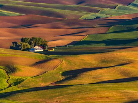 Farm Country, Palouse, Washington