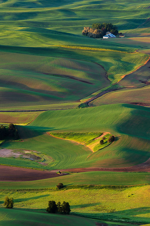 Tractor, Fields and Farm House, Palouse, Washington