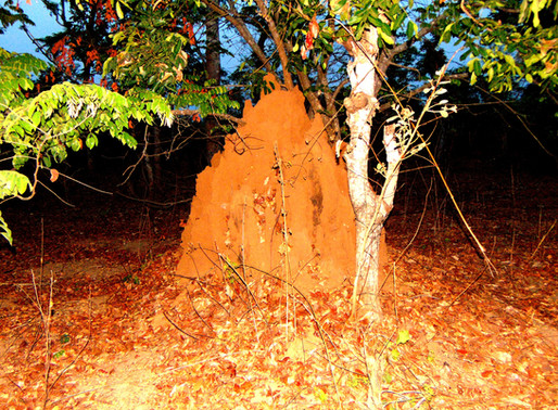 What has Termite got to offer brick makers?