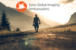 Sony Ambassador