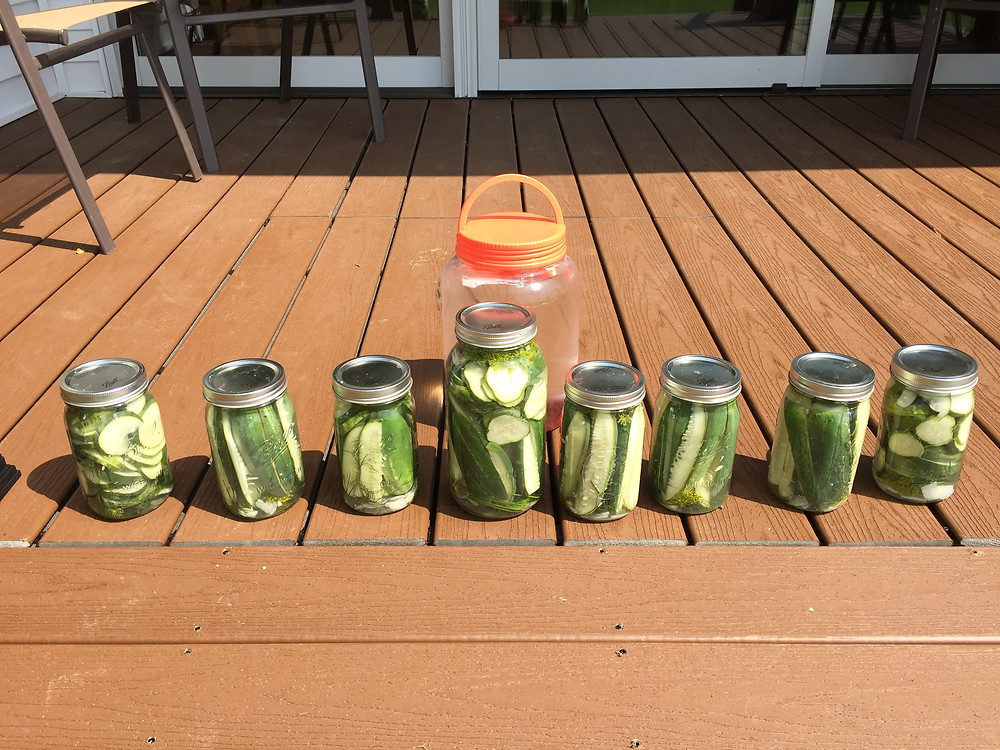 Image of refrigerator pickles sitting in the sun on a deck.