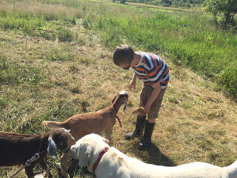 A boy, his goats, and his loyal dog