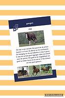 Daphne van der Voort - management en sportmassage voor paarden